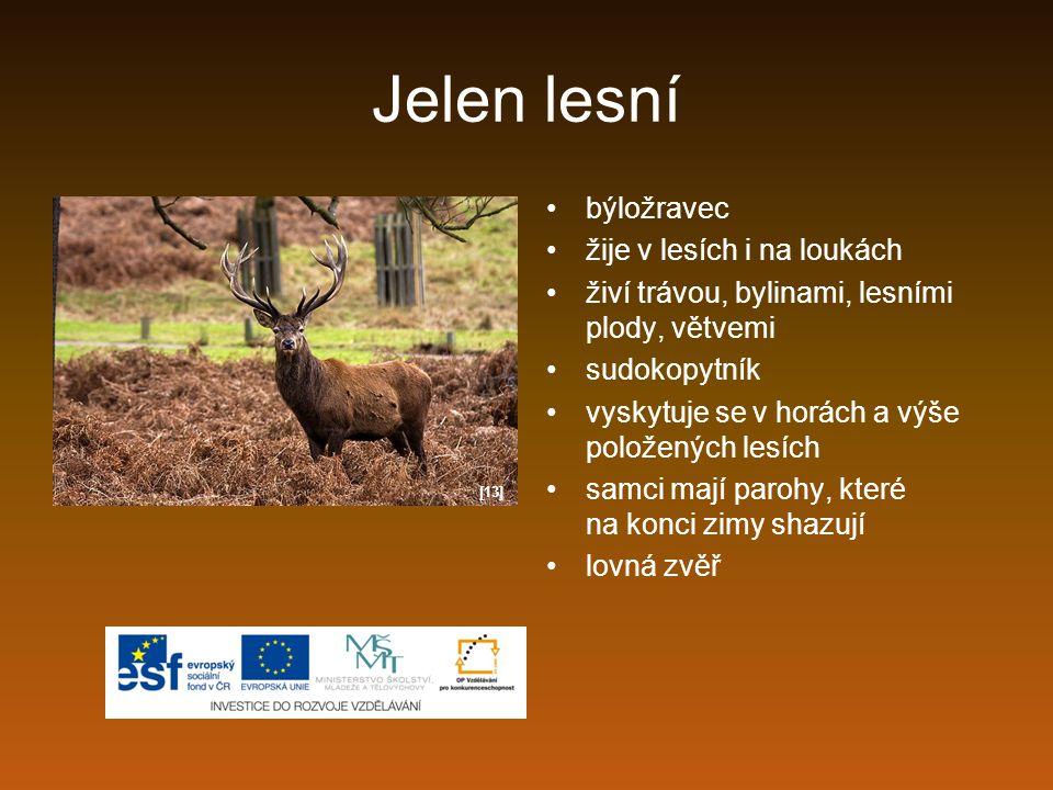 Jelen lesní býložravec žije v lesích i na loukách