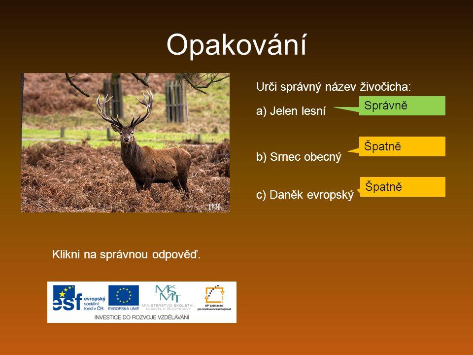 Opakování Urči správný název živočicha: Správně a) Jelen lesní Špatně