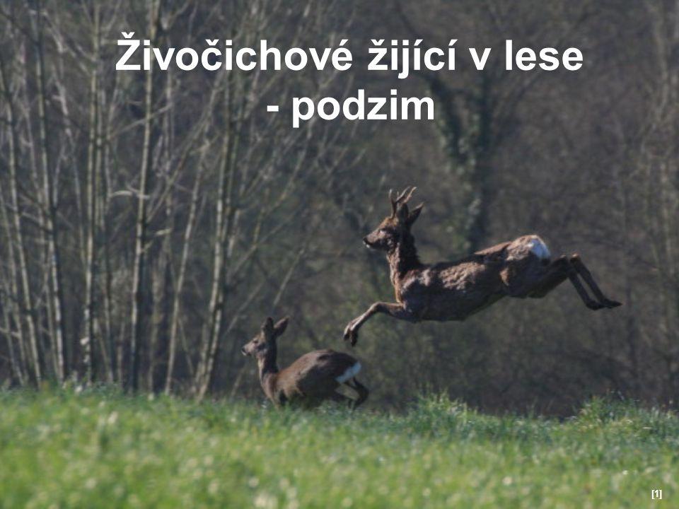 Živočichové žijící v lese