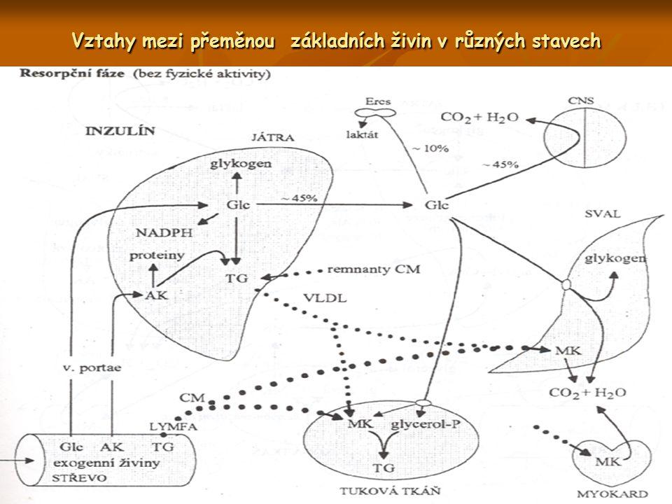 Vztahy mezi přeměnou základních živin v různých stavech