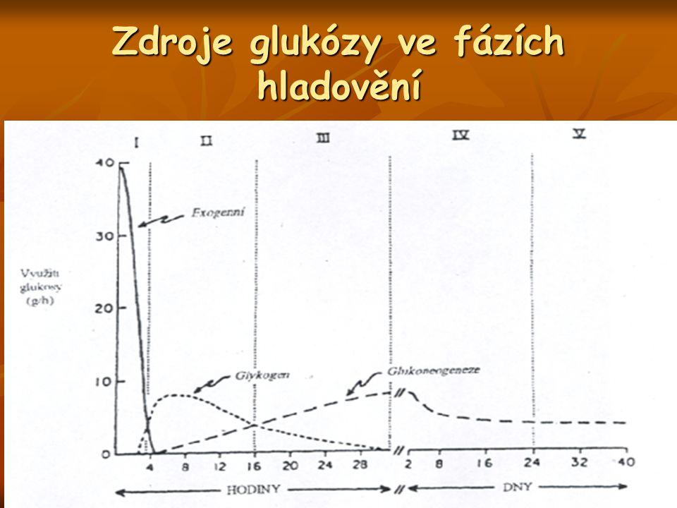 Zdroje glukózy ve fázích hladovění