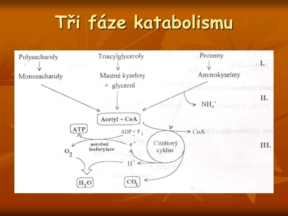 Tři fáze katabolismu