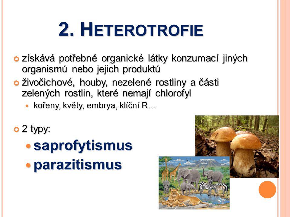 2. Heterotrofie saprofytismus parazitismus