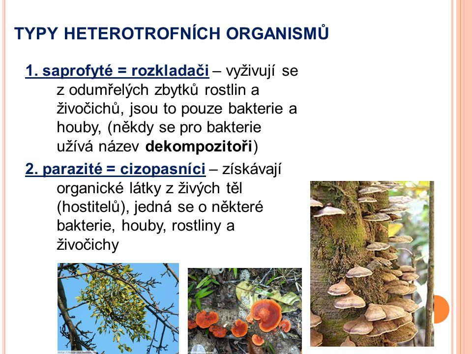typy heterotrofních organismů
