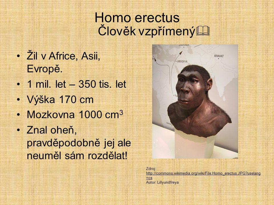 Homo erectus Člověk vzpřímený