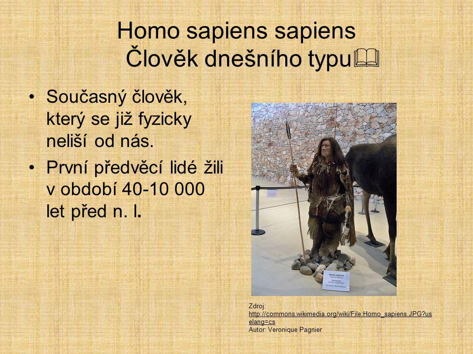 Homo sapiens sapiens Člověk dnešního typu