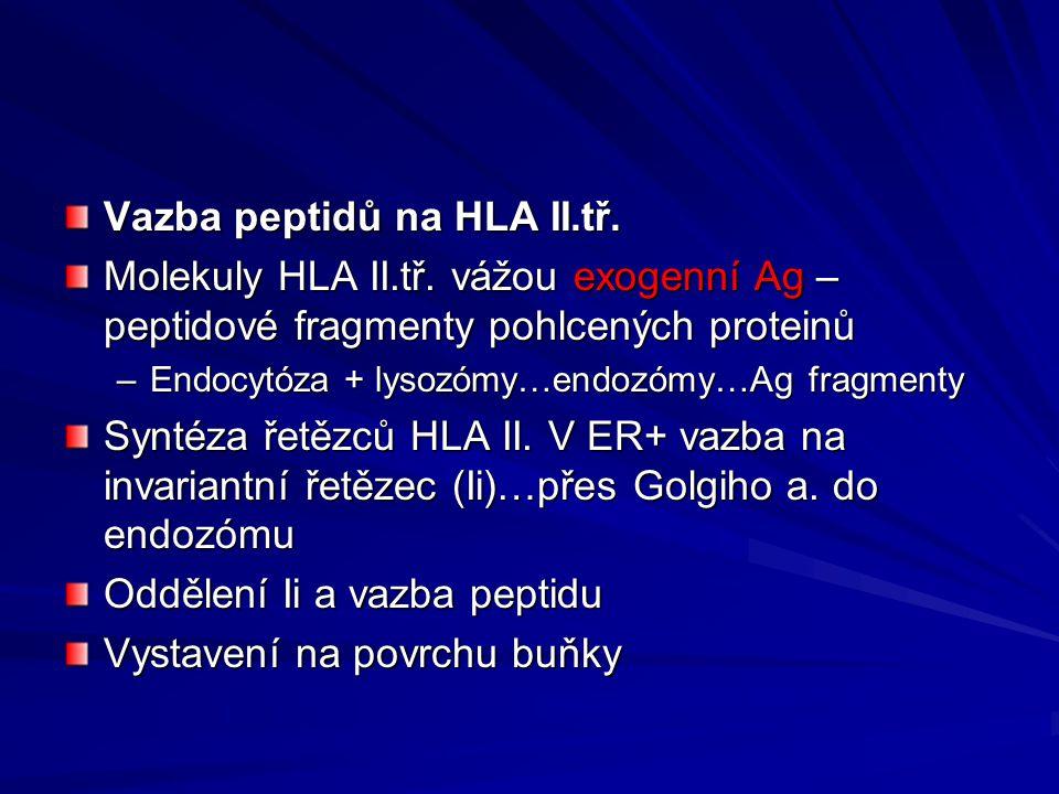 Vazba peptidů na HLA II.tř.