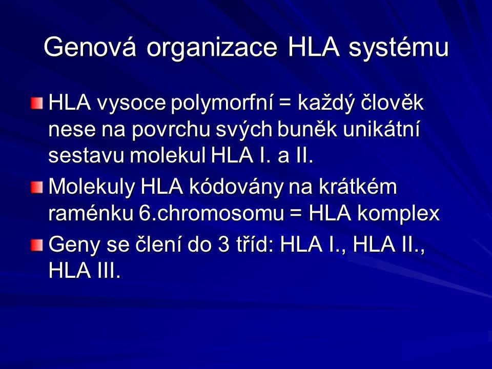 Genová organizace HLA systému
