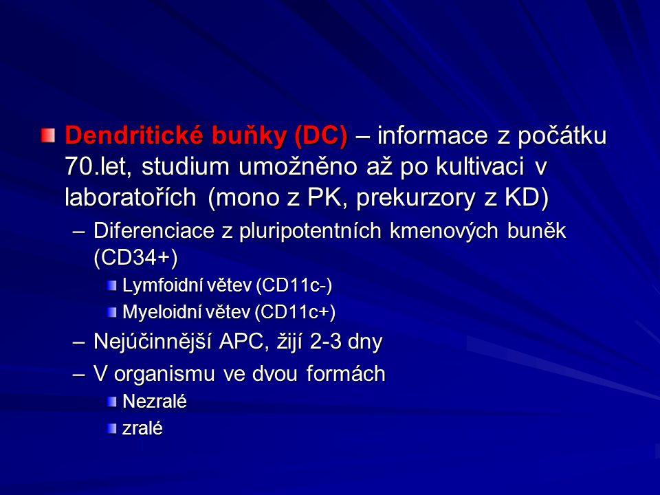 Dendritické buňky (DC) – informace z počátku 70