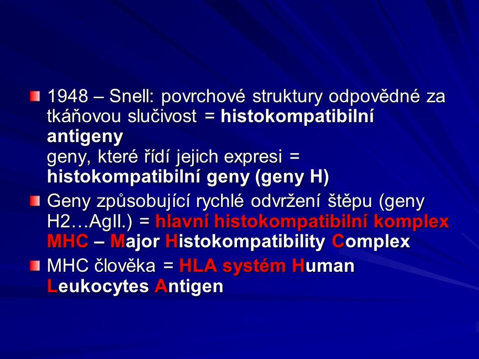 1948 – Snell: povrchové struktury odpovědné za tkáňovou slučivost = histokompatibilní antigeny geny, které řídí jejich expresi = histokompatibilní geny (geny H)