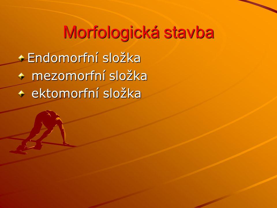 Morfologická stavba Endomorfní složka mezomorfní složka