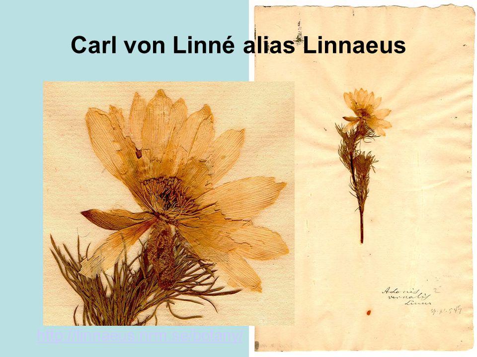 Carl von Linné alias Linnaeus