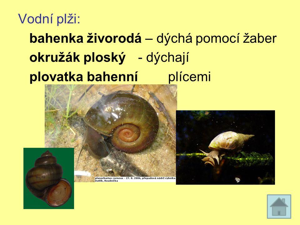 Vodní plži: bahenka živorodá – dýchá pomocí žaber okružák ploský - dýchají plovatka bahenní plícemi
