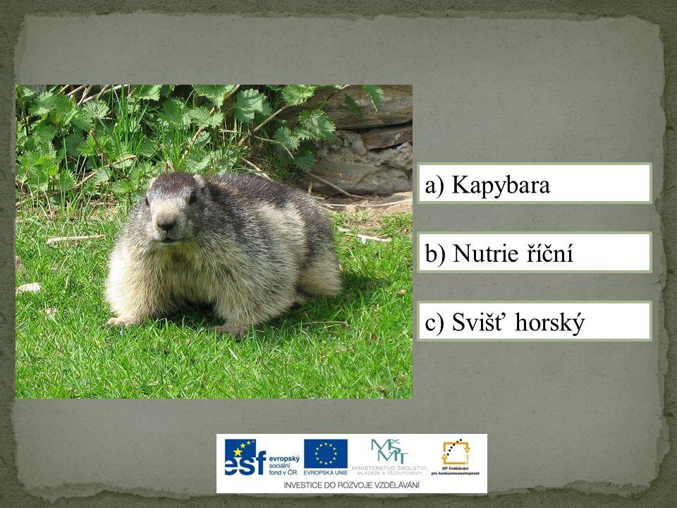 a) Kapybara b) Nutrie říční c) Svišť horský