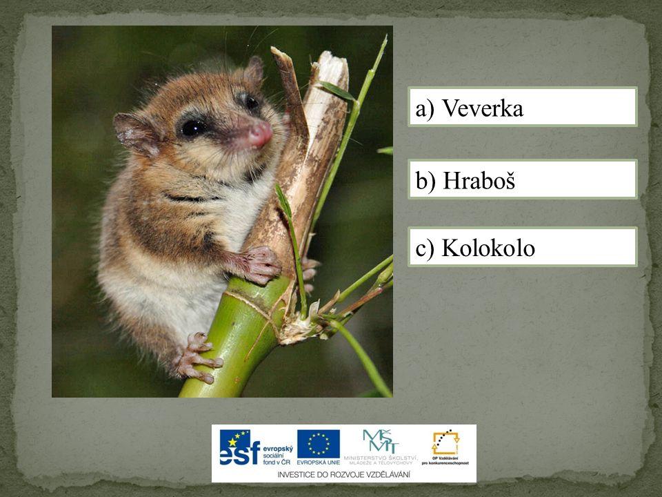 a) Veverka b) Hraboš c) Kolokolo