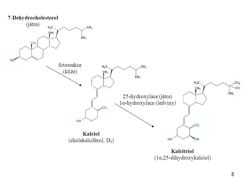 7-Dehydrocholesterol Kalciol Kalcitriol