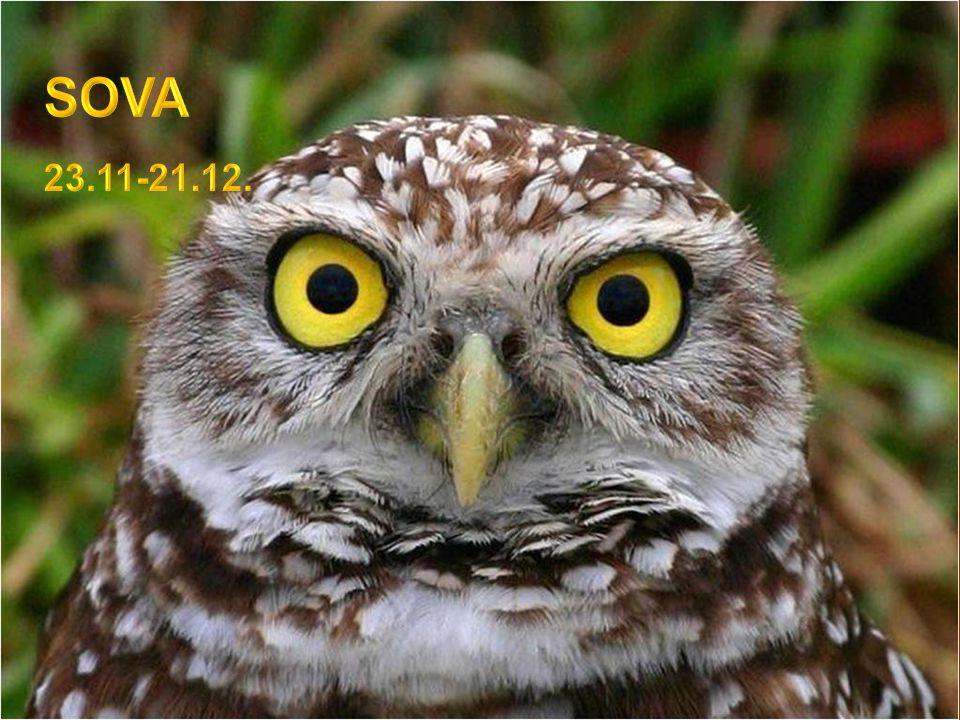 SOVA 23.11-21.12.