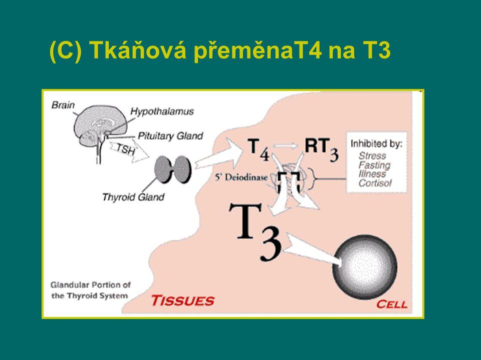 (C) Tkáňová přeměnaT4 na T3