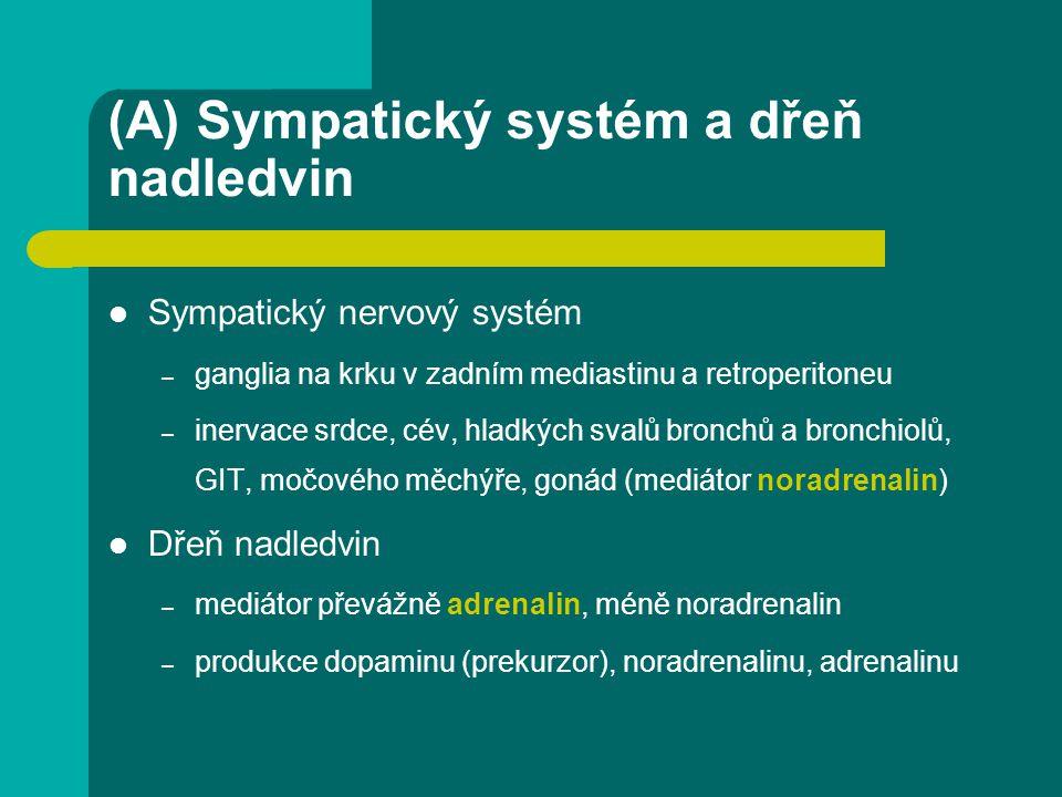 (A) Sympatický systém a dřeň nadledvin