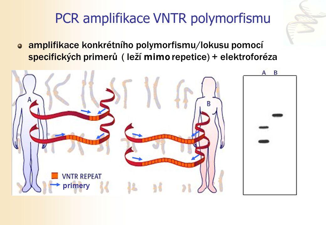 PCR amplifikace VNTR polymorfismu