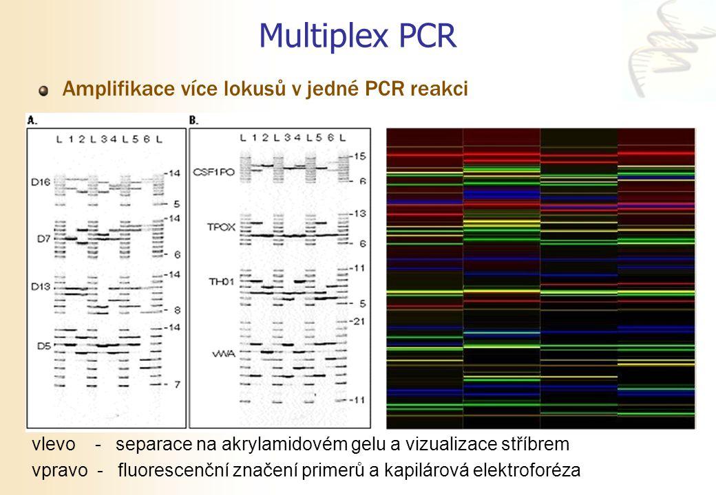 Multiplex PCR Amplifikace více lokusů v jedné PCR reakci