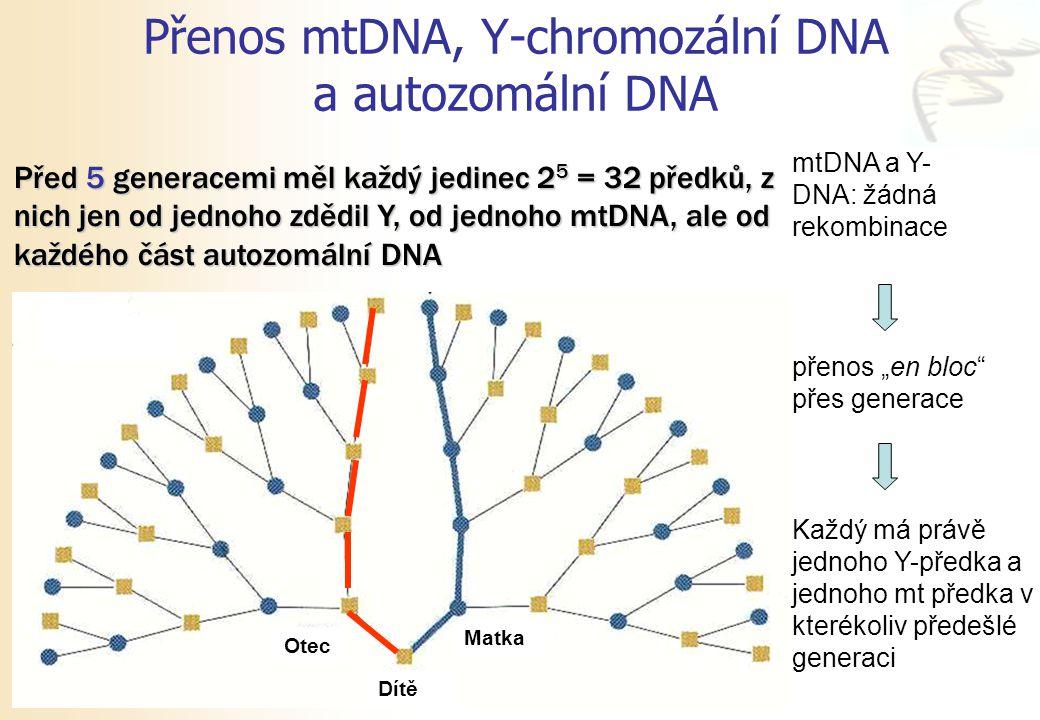 Přenos mtDNA, Y-chromozální DNA a autozomální DNA