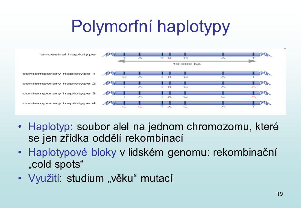 Polymorfní haplotypy Haplotyp: soubor alel na jednom chromozomu, které se jen zřídka oddělí rekombinací.