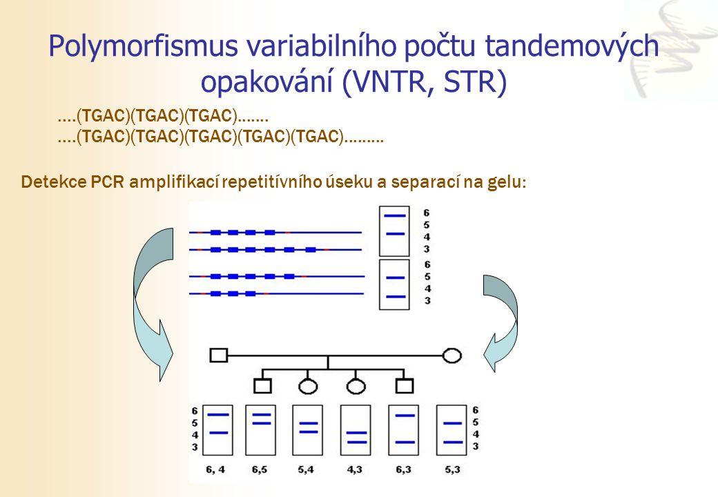 Polymorfismus variabilního počtu tandemových opakování (VNTR, STR)