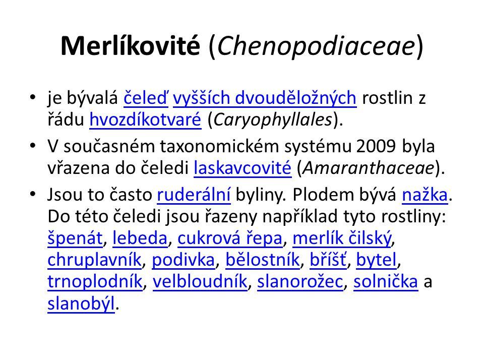 Merlíkovité (Chenopodiaceae)
