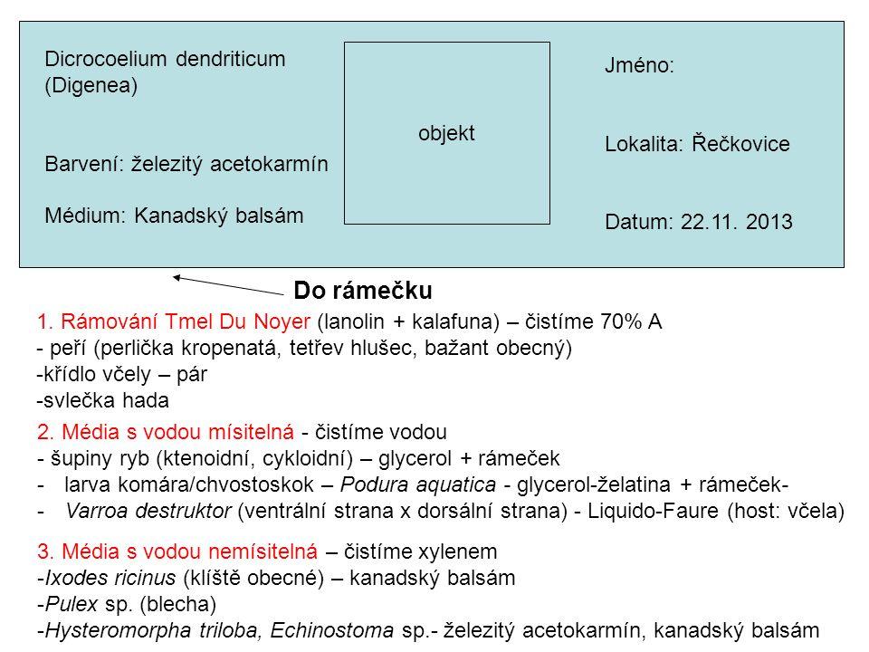 Do rámečku Dicrocoelium dendriticum Jméno: (Digenea) objekt