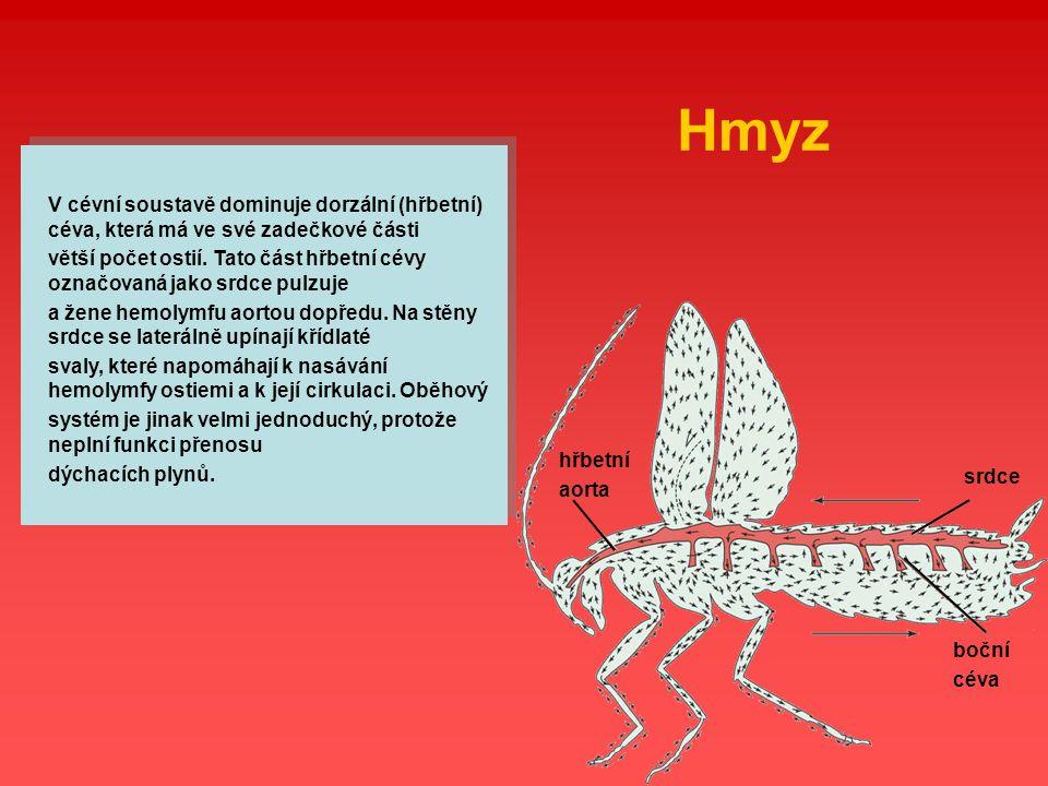 Hmyz V cévní soustavě dominuje dorzální (hřbetní) céva, která má ve své zadečkové části.