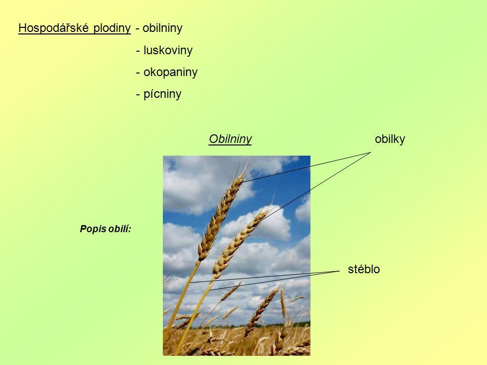Hospodářské plodiny - obilniny - luskoviny - okopaniny - pícniny