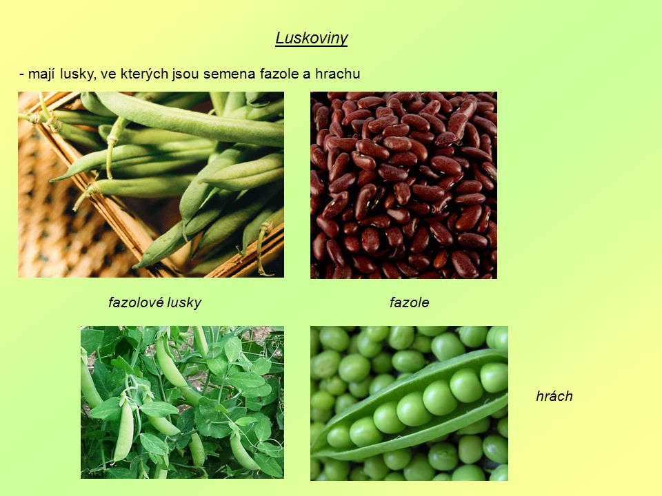 Luskoviny - mají lusky, ve kterých jsou semena fazole a hrachu