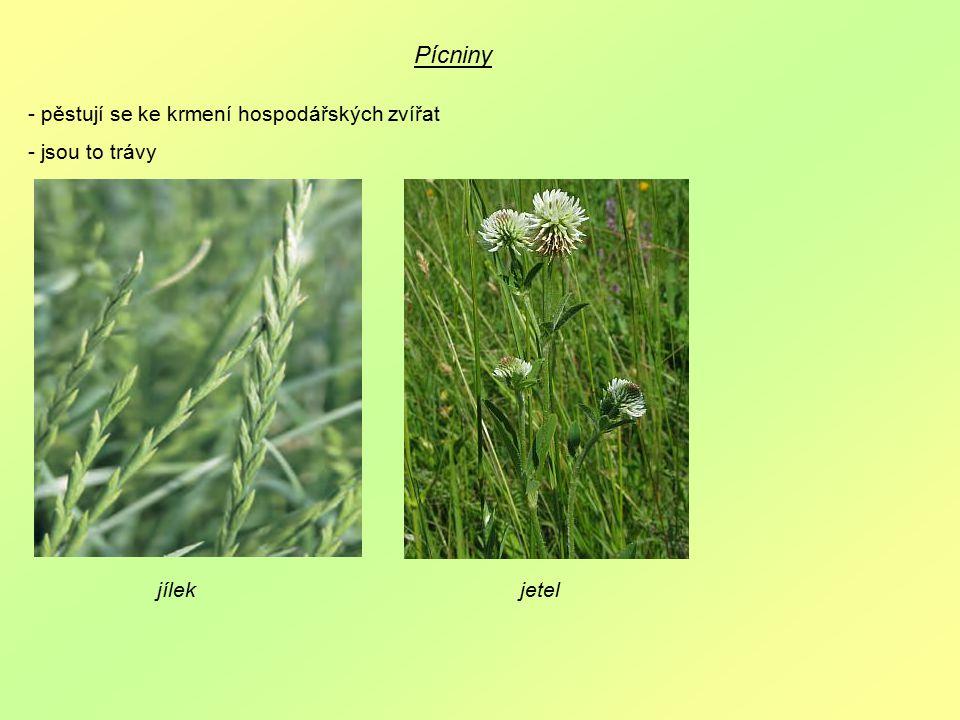 Pícniny - pěstují se ke krmení hospodářských zvířat - jsou to trávy