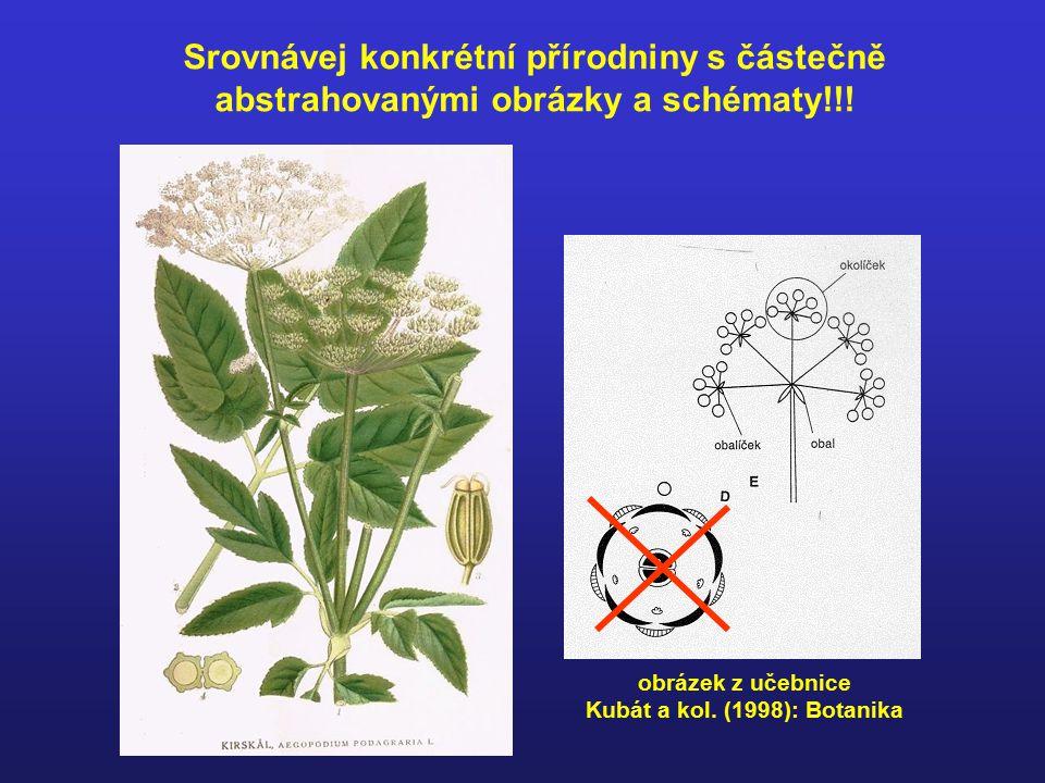 Kubát a kol. (1998): Botanika