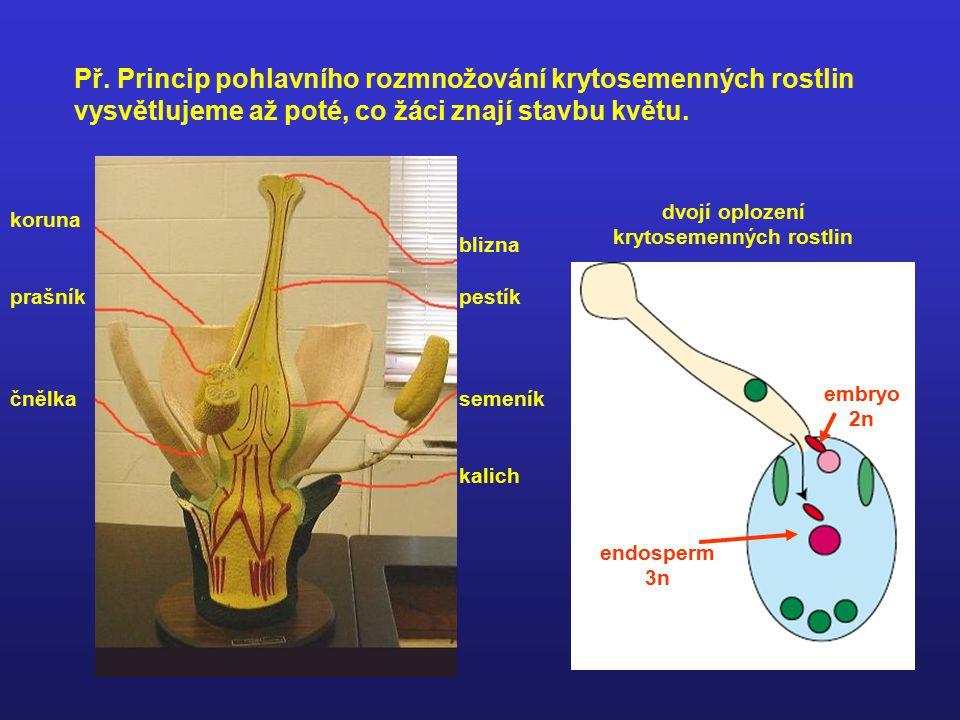 dvojí oplození krytosemenných rostlin