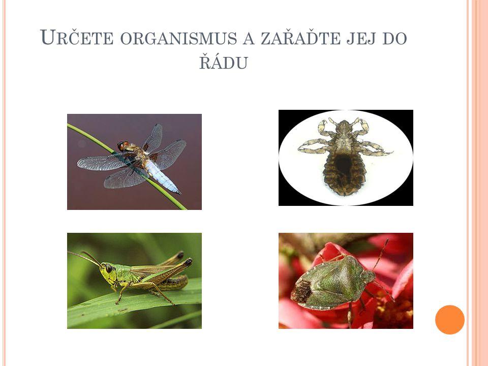 Určete organismus a zařaďte jej do řádu