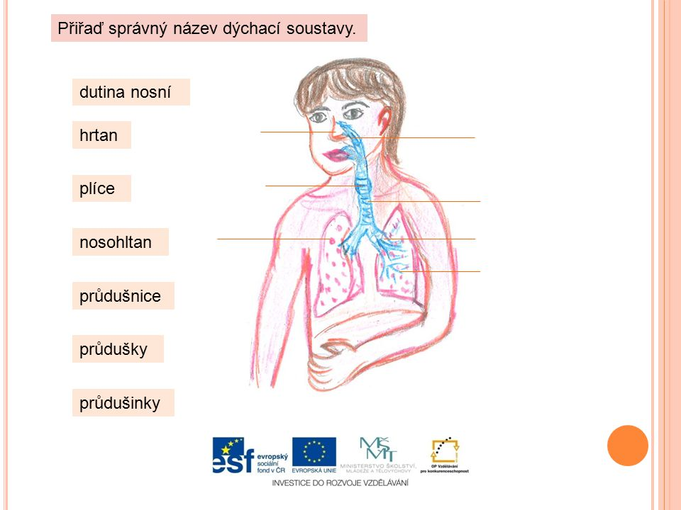 Přiřaď správný název dýchací soustavy.
