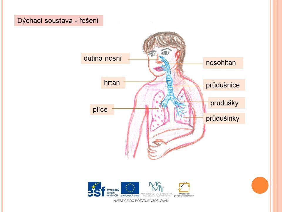 Dýchací soustava - řešení