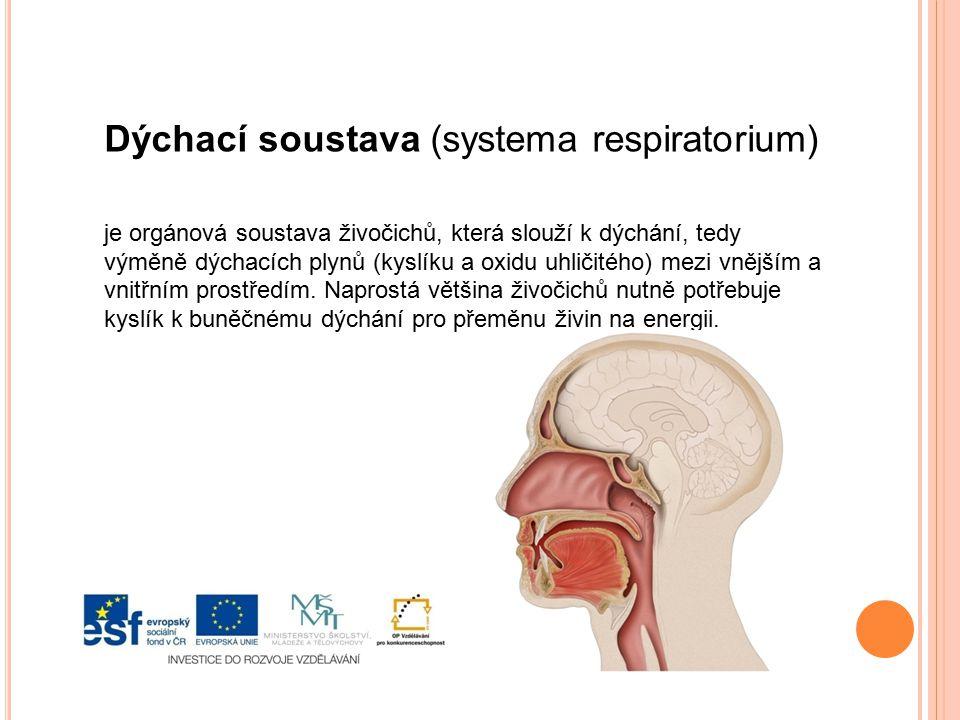 Dýchací soustava (systema respiratorium)