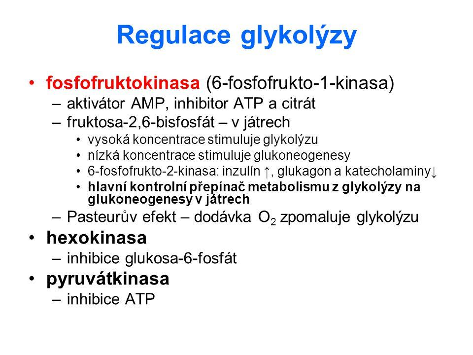 Regulace glykolýzy fosfofruktokinasa (6-fosfofrukto-1-kinasa)
