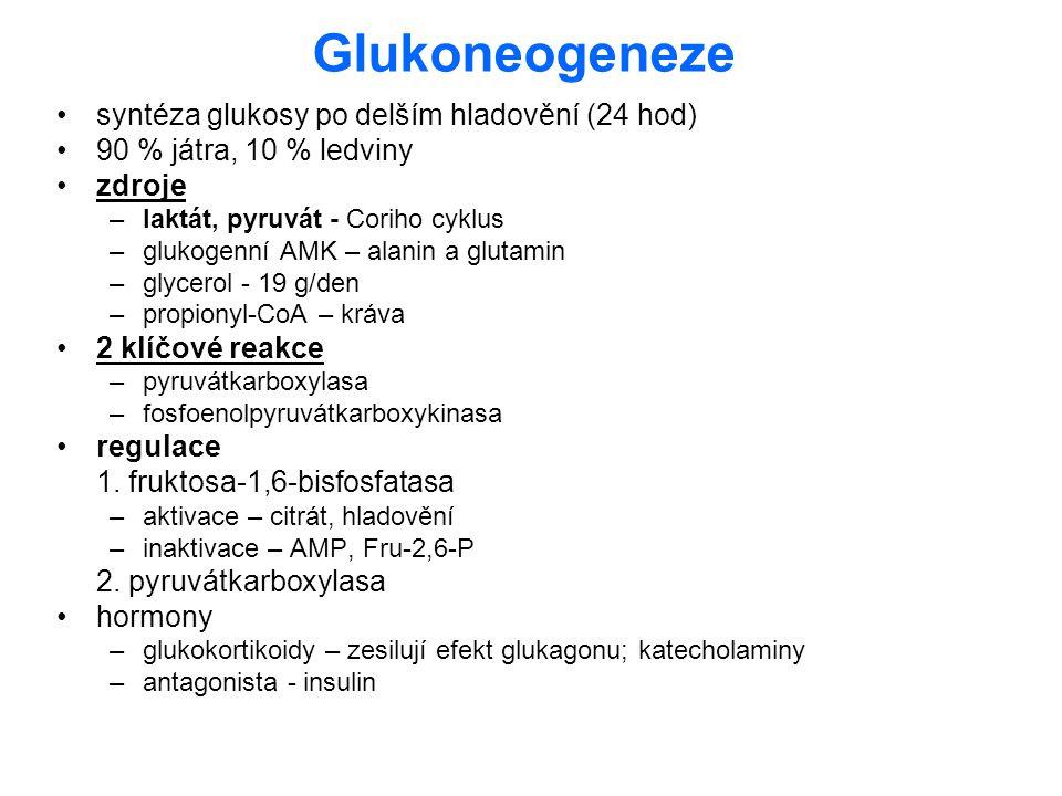 Glukoneogeneze syntéza glukosy po delším hladovění (24 hod)