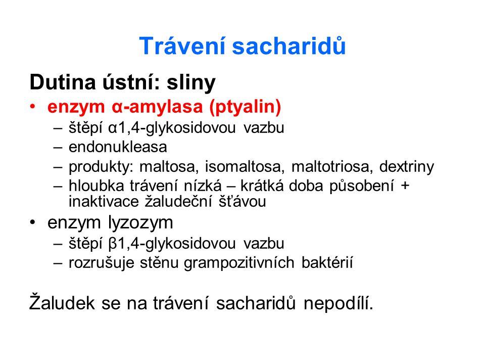 Trávení sacharidů Dutina ústní: sliny enzym α-amylasa (ptyalin)