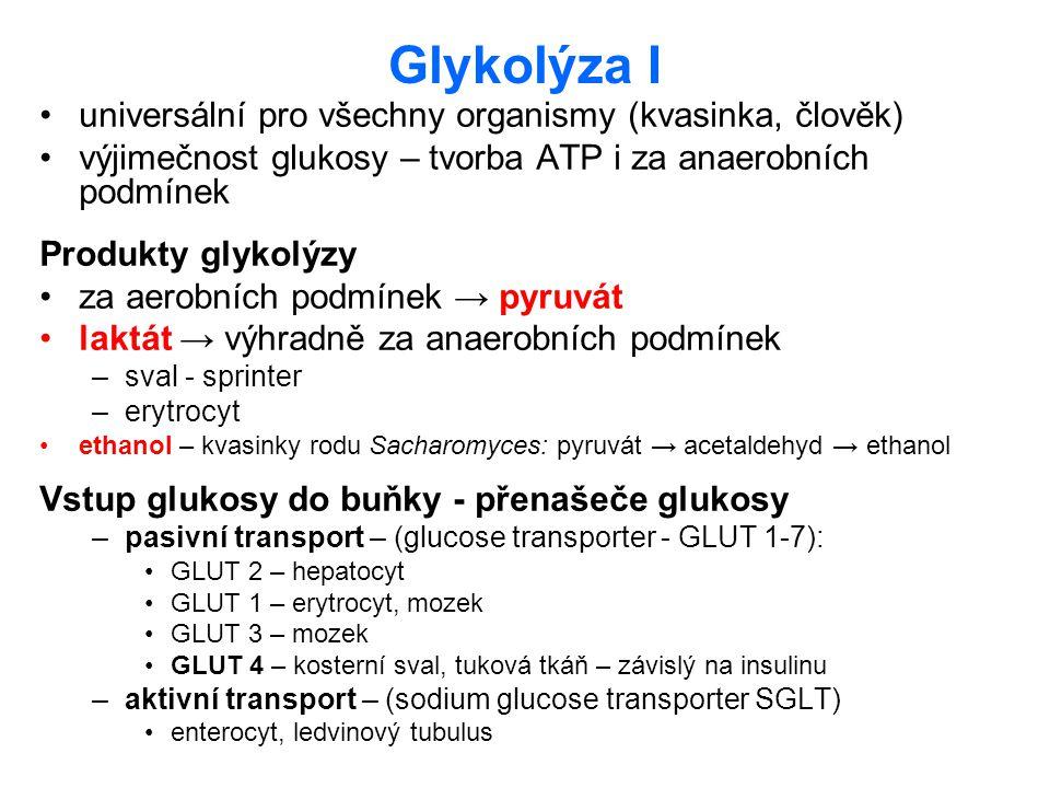 Glykolýza I universální pro všechny organismy (kvasinka, člověk)