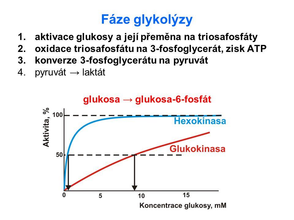 Fáze glykolýzy aktivace glukosy a její přeměna na triosafosfáty