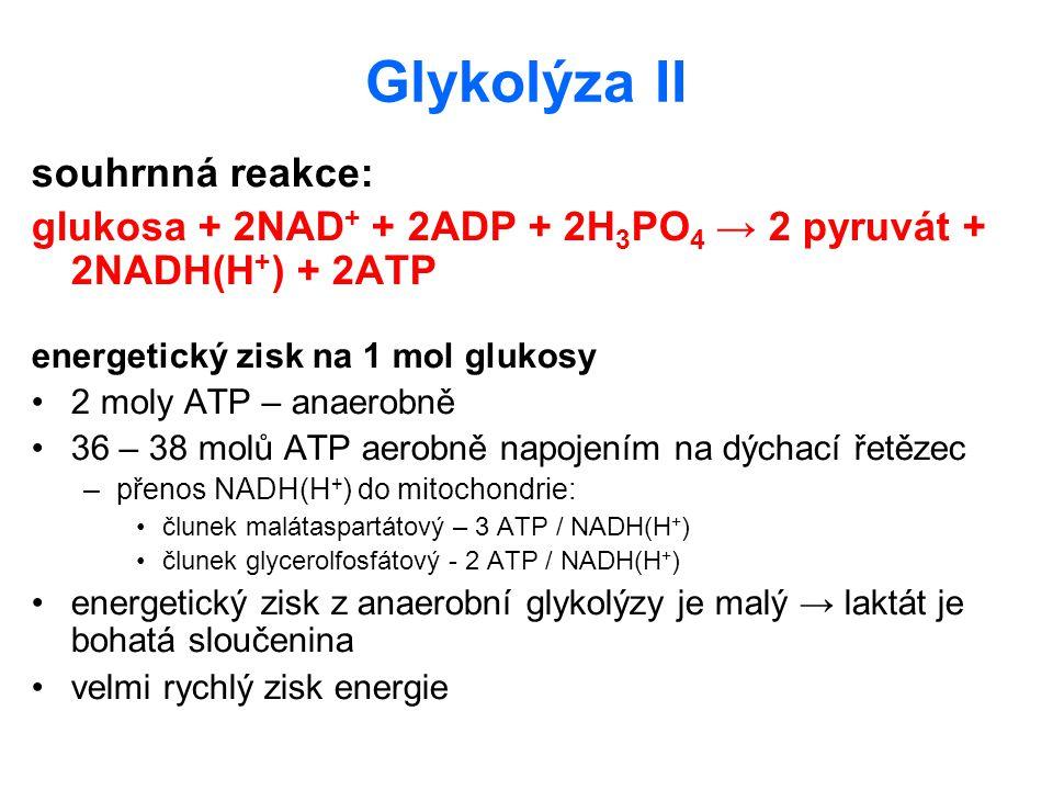 Glykolýza II souhrnná reakce: