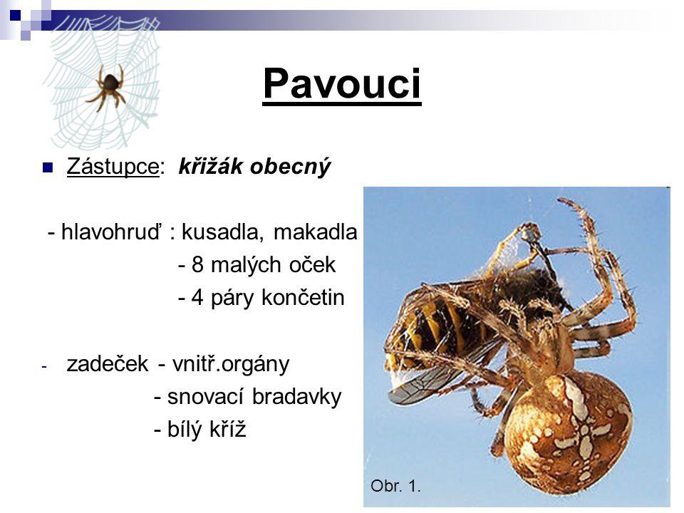 Pavouci Zástupce: křižák obecný - hlavohruď : kusadla, makadla