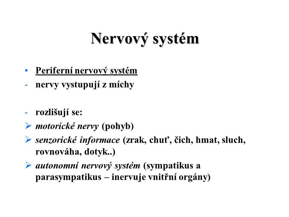 Nervový systém Periferní nervový systém nervy vystupují z míchy