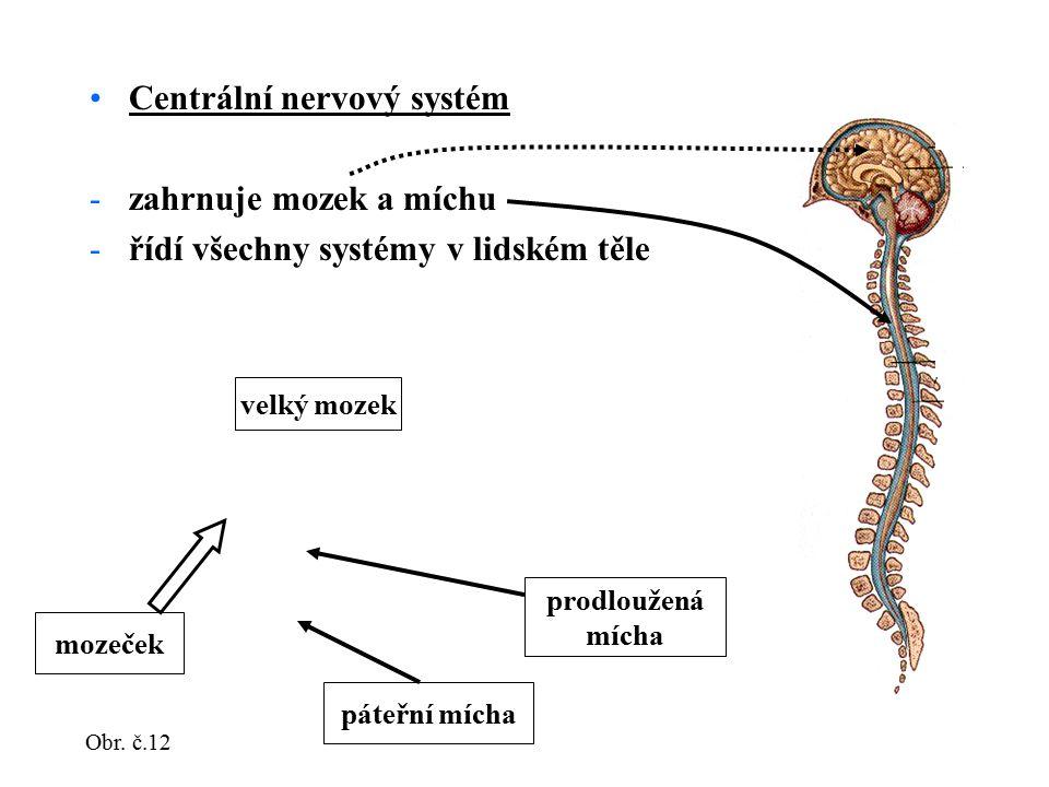 Centrální nervový systém zahrnuje mozek a míchu