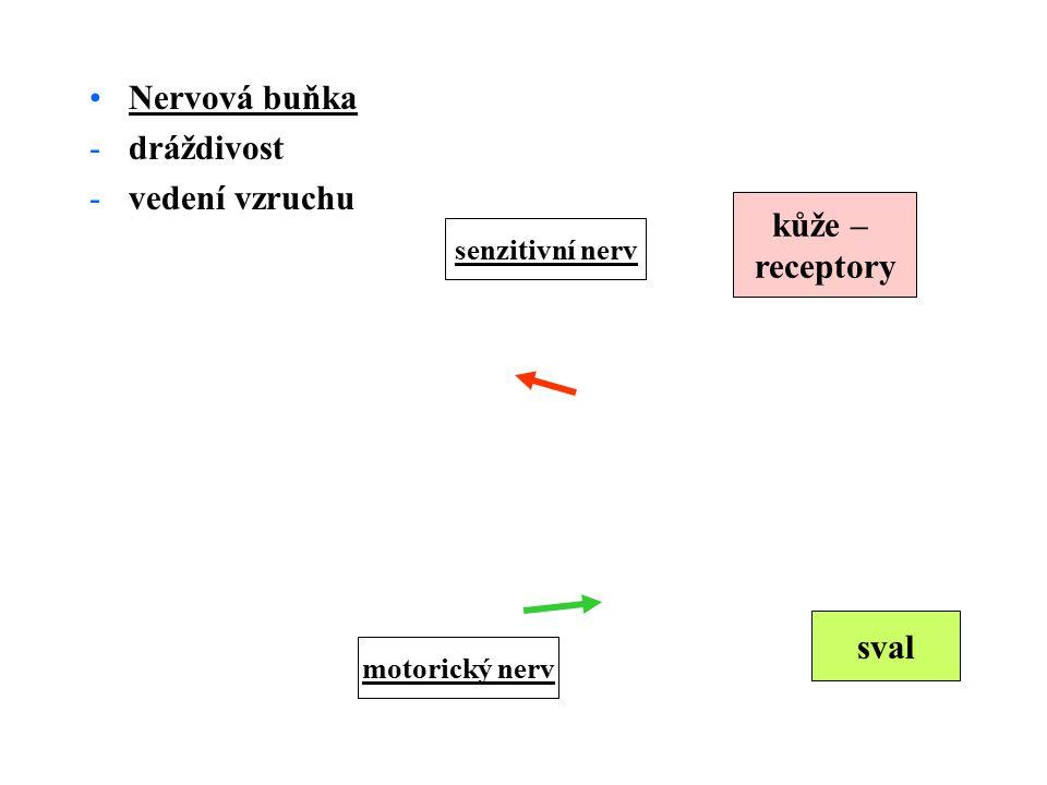 Nervová buňka dráždivost vedení vzruchu kůže – receptory sval